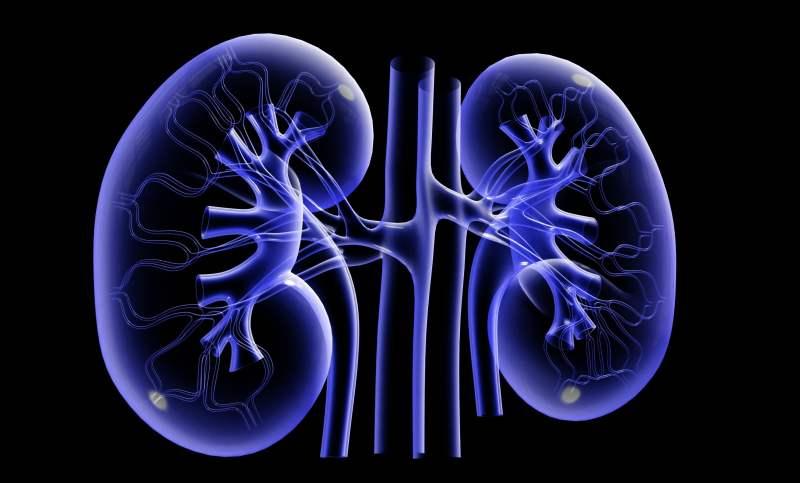 Los riñones y sus funciones