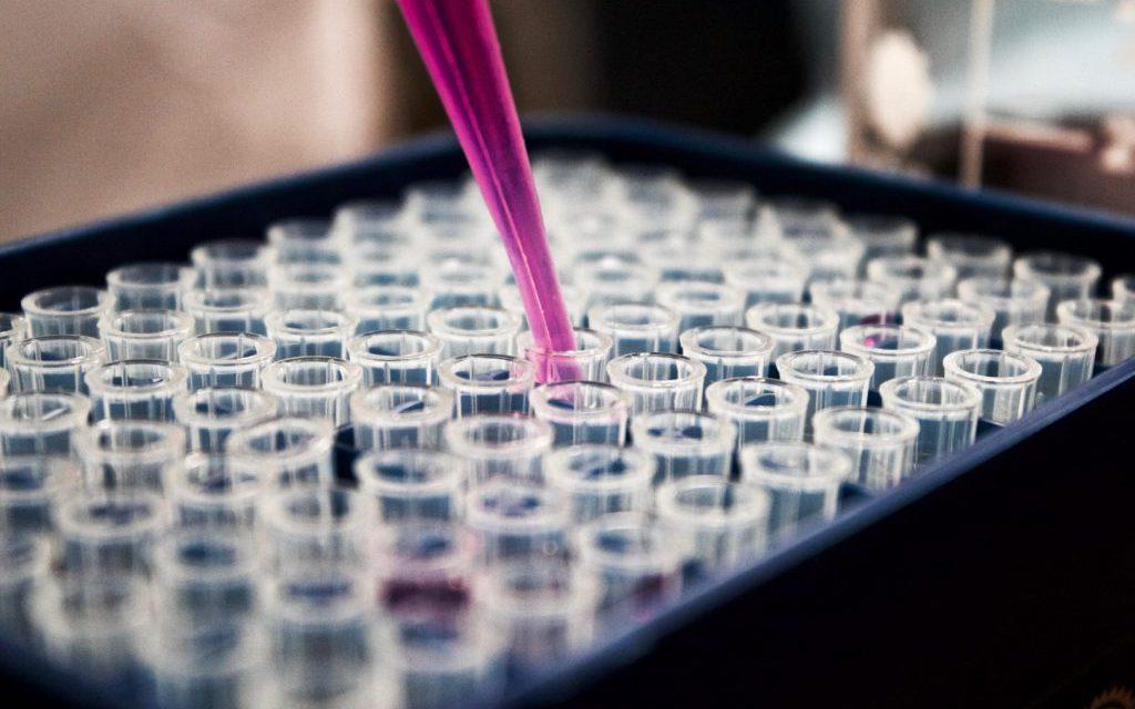 Un paso más cerca del desarrollo del riñón de laboratorio