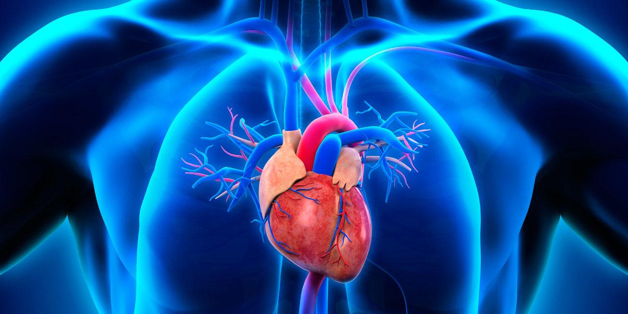 La terapia con CAR T se explora para la enfermedad cardíaca