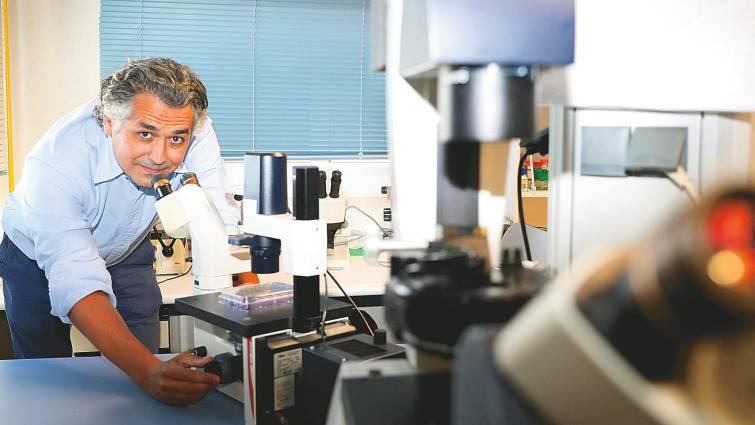 Bloquear el sistema inmune para evitar el rechazo de un trasplante