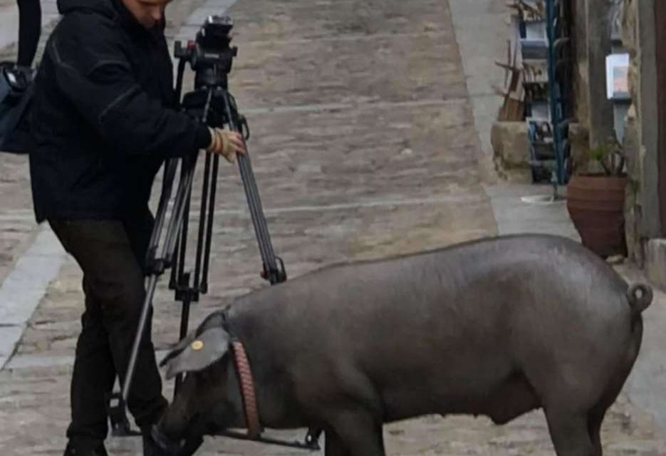 Mogarraz sorteó el cerdo de San Antón
