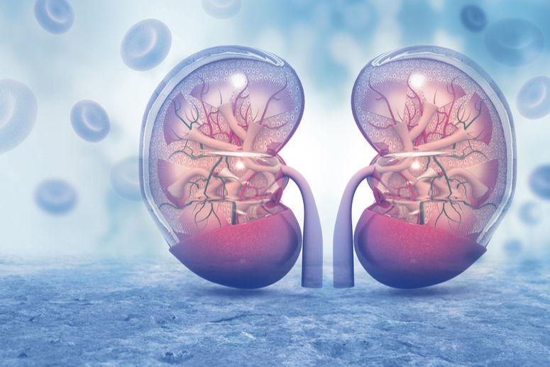 Descubren un gen que modifica la gravedad de una enfermedad renal hereditaria