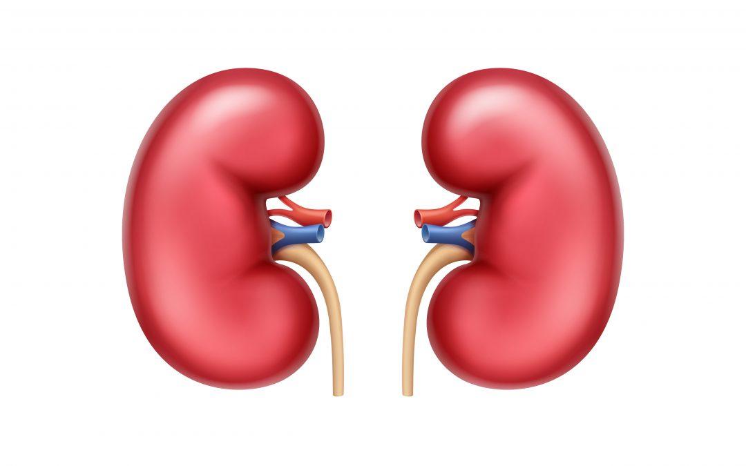 Los pacientes con trasplantes de riñón son más vulnerables a bacterias comunes que generalmente son inofensivas